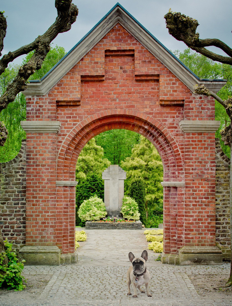 archway with dog